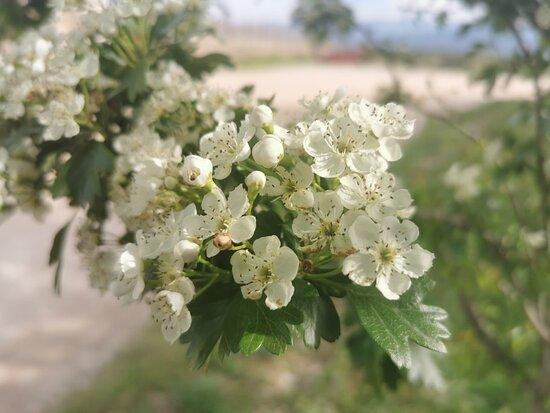 Muy bonita flor y con un olor maravilloso.