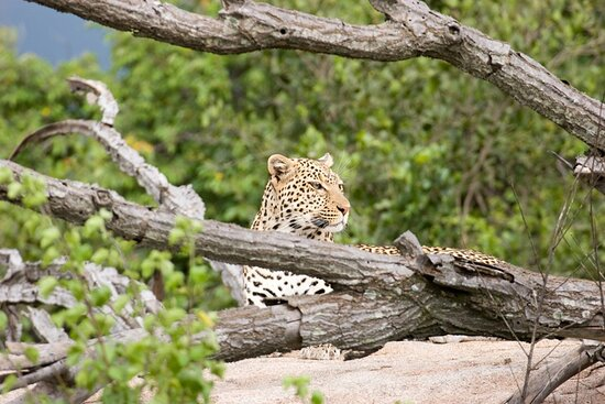 Tanzania is among of the best African country for tourism activities, the country is crowded with wildlife, highest mountains, attractive cultures & beaches,  and so many availability of comfortable accommodation.  We make the most of your vacation. Book Now, Pay Later! Book with no deposit, total flexibility and our Covid Refund Guarantee.