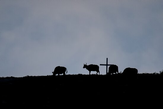 The Bisons that were sighted from the SAND RIVER Bungalow accommodation in the morning.