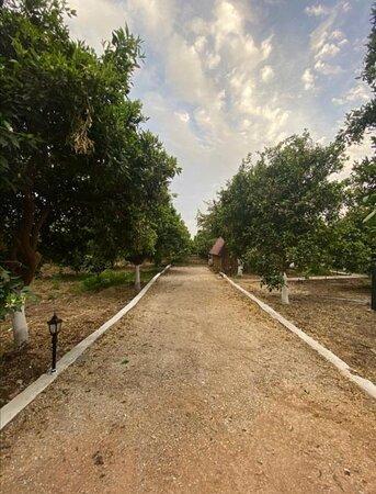 Yaniklar, Türkei: Araç yolumuz 🚕🚕