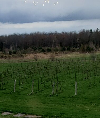 """We have planted 4000 """"winter hardy, cold climate"""" vines and the success has been both inspiring and spectacular.  These remarkable varieties have withstood temperatures in our vineyard of below –35 degrees centigrade. Could this be Napa or Niagara north! Not yet. But?"""