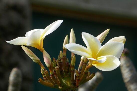 Ilha de Páscoa, Chile: Isola di Pasqua