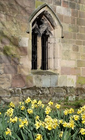The Parish Church of St Mary the Virgin, Wirksworth:  a host of golden daffodils