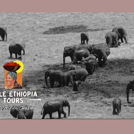 Tiya, Ethiopia: HAILE ETHIOPIA TOURS  EXPLORE WITH US - CHEBERA - CHURCHURA NATIONAL PARK . https://haileethiopiatours.com/  ETHIOPIAN TRAVEL AGENCY.  #ETHIOPIATRAVELAGENCY #CHEBERACHURCHURAPAR #ETHIOPIATOURS #VISITETHIOPIA #TOURTRAVELETHIOPIA #ETHIOPIANTOUROPERATOR #TRAVELTOETHIOPIA #TOURTOETHIOPIA #ETHIOPIANTOUR #LOCALETHIOPIANTOURCOMPANY #ETHIOPIANTRAVELAGENCY #HAILEETHIOPIATOURS #ETHIOPIANTOURCOMPANY #OMOVALLEYTOUR #NORTHETHIOPIATOUR #BALEMOUNTAINSNATIONALPARK #SIMENNATIONALPARK #DANAKILTOUR #ETHIOPIATOUR