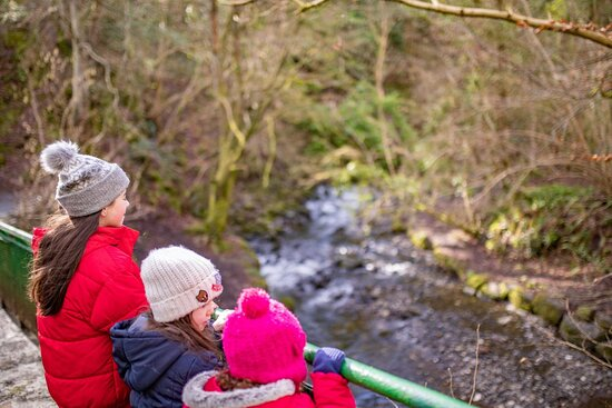 There's magic in the air, in the trees and the river. Listen carefully and you may hear the fairy music as you wander through our Fairy Glen.