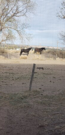 Quemado, NM: This was taken out of our bedroom window.
