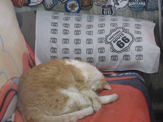 """""""Guard"""" cat at Hackberry General Store"""