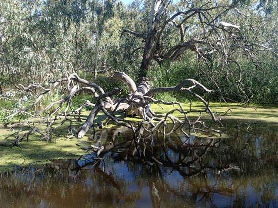 Warren, Úc: Sculptural tree