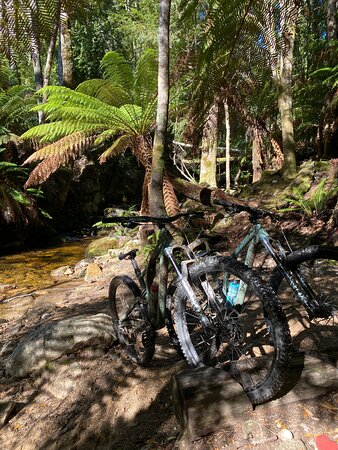 Blue Derby Pods Ride Experience 3-Day Mountain Bike Adventure in Exclusive Pods: Pit-stop on the Blue Tier descent