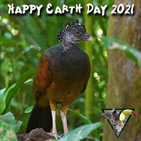 La Democracia, Belize: Happy Earth Day 2021 from The Belize Zoo and Tropical Education Center!!!