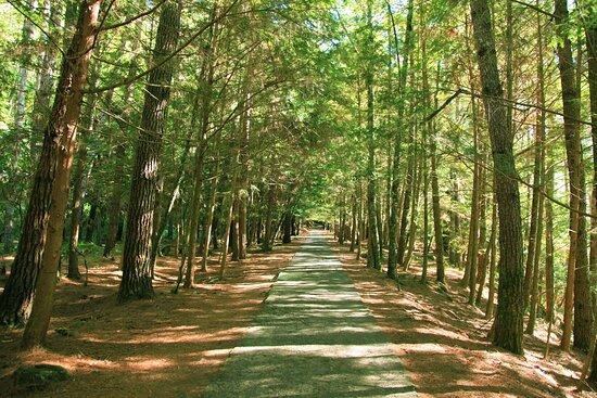 武陵国家森林游乐区
