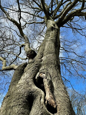 The tightly trapped & twisted tree-troll.