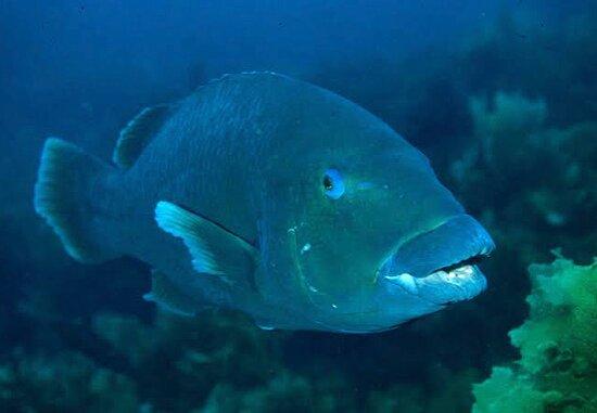 Hook Island, Úc: Red Thunder Snorkelling tour, feeding the fish