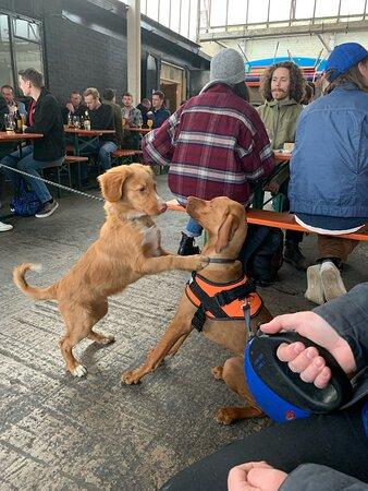 Meeting new friends