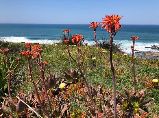 Portugal: Springtime Alentejano e Costa Vincentina, Parque Natural do Sudoeste