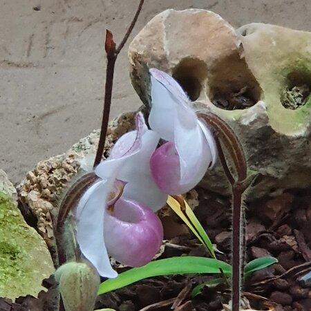 Abril 2021. Primavera  en el Orquidario.  Una gozada!!!