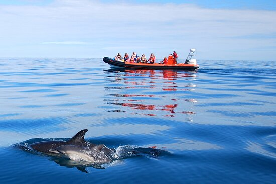 Coast Boat Trips in Cornwall