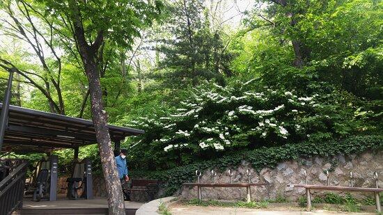 Namsan Park in late April