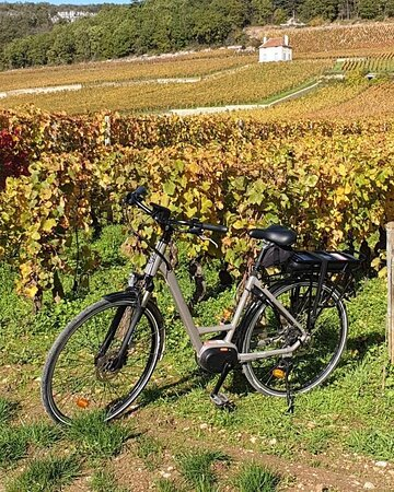 Nos vélos se plaisent dans les vignes