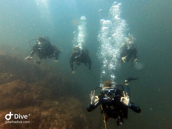 FunDive Catalina Islands (2 dives only for Certified divers) Photo