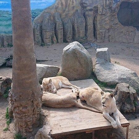 Super mini Zoo.