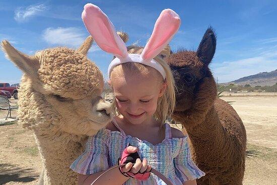 Billets pour le zoo pour enfants Nature Health Farms, le magasin...