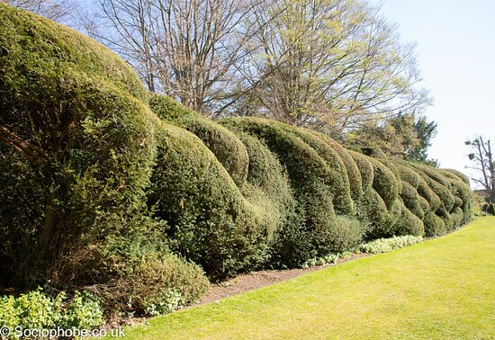 Hinton Ampner, UK: Hedges