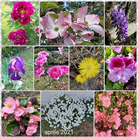 Meda, Italien: I fiori💐 del mio giardino. The flowers 💐in my garden