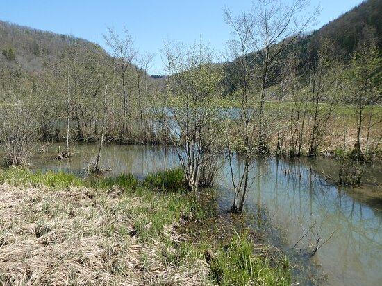 Biotop Wangental Natur Pur