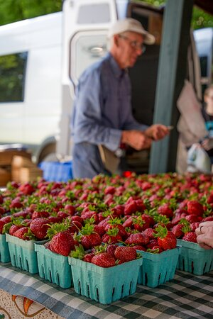 Freshly picked strawberries at the Saratoga Farmers' Market