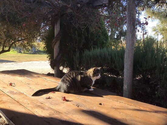 """Winery Cat ....."""" Temperamental Tom """" Mouse catcher by night - Tired & Sleepy by Day."""