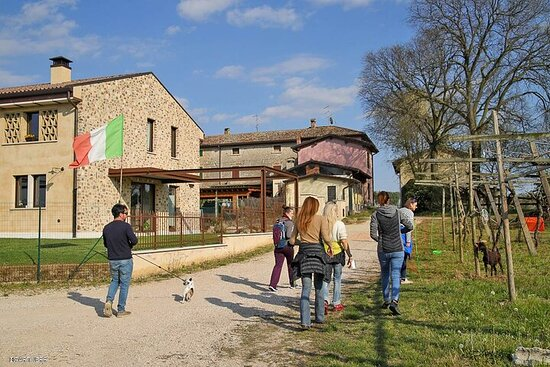 Small-Group Vineyard Tour and Wine Tasting in Garda Countryside