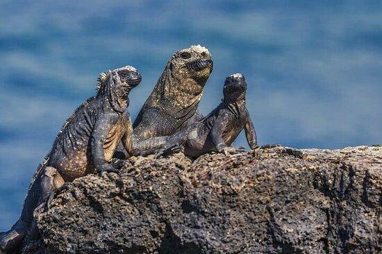 Programme unique de 8 jours aux îles Galapagos