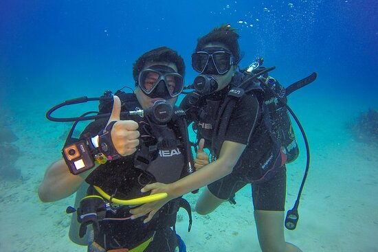 Ảnh về Full-Day Catalina Island Scuba Diving Tour from Punta Cana