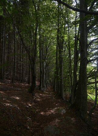 Province of Pistoia, Itália: il sentiero