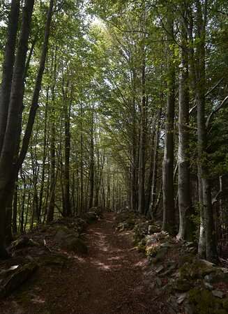 Province of Pistoia, إيطاليا: il sentiero