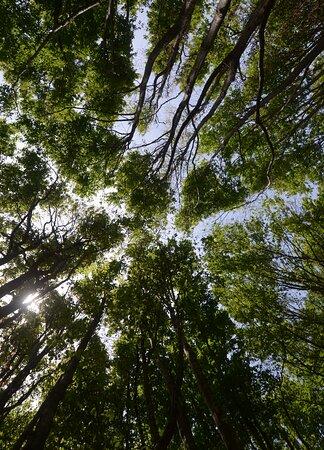 Province of Pistoia, Itália: il bosco