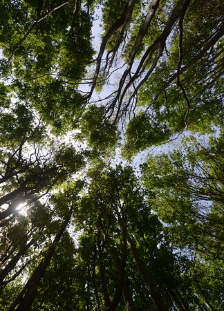 Province of Pistoia, إيطاليا: il bosco