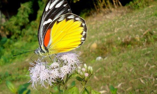 الهند: http://southindiatourstravels.co.in/tourbooking/guwahati-shillong-cherrapunjee-jowai-kaziranga-tour-package/  7708007775 tourstravelssouthindia@gmail.com