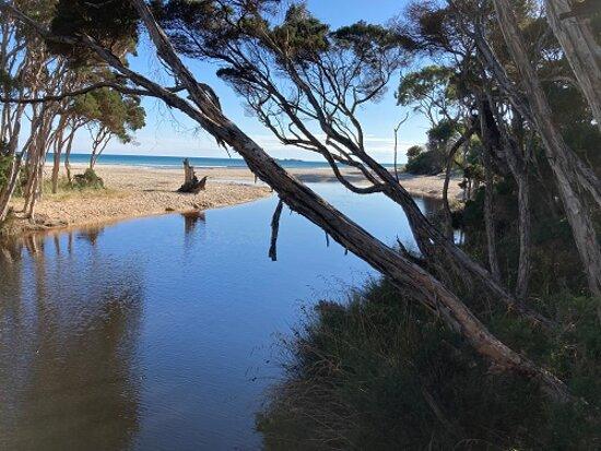 Sisters Beach, Austrália: Creek & Trees