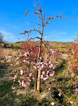 """Inverbervie, UK: """"And the day came when the risk to remain tight in a bud was more painful than the risk it took to blossom."""" - Anais Nin"""