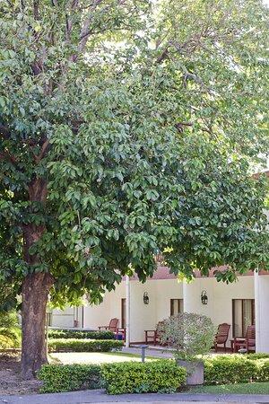 Jardines tropicales con árboles frutales