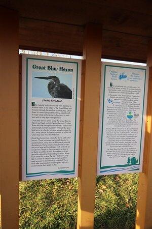 Beautiful !Great Blue Heron
