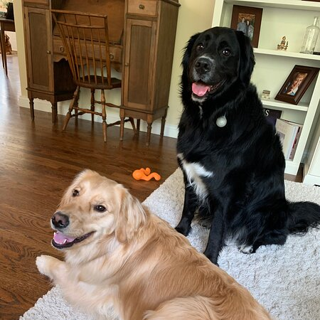 Washington: Good pups