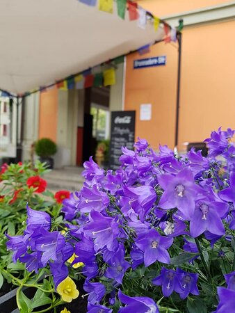 Yukta hat die Terrasse verschönert, so ists bei uns auch an grauen Tagen wie heute farbenfroh  . . . #blumenfreude #kirchenfeld #bern