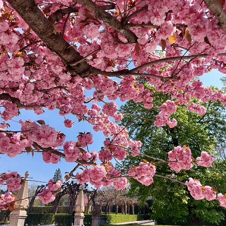 Wurzburg, Germany: Great walk with a nice weather and seeing Cherry blossom in Würzburg Residents.in Summer time Amazing place ...I Love this city😍