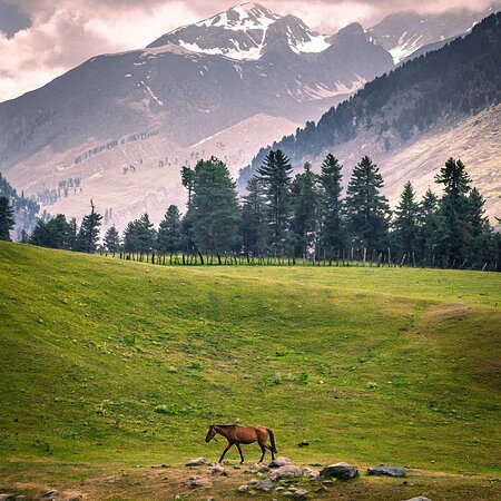 Kongwattan meadow is the first stop for  Aharbal-Kounsarnag Lake trek.   The trek starts from famous tourist attraction Aharbal waterfall in Kulgam district.  The beautiful meadows in the lap of Pir Panjal Range oversees gushing streams flowing through it.  Kausarnag Lake trek is one of the most beautiful treks one can undertake in summers   We recommend travellers to stay home stay safe to stem the pendamic spread... Countryside Kashmir  +919596404872 / 75