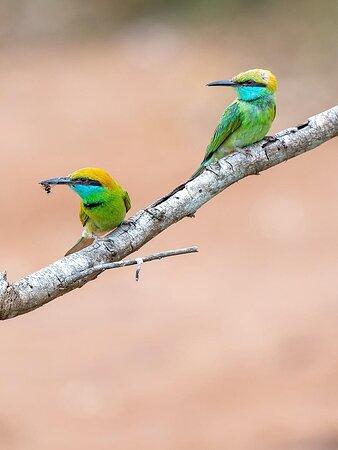 Yala National Park, Sri Lanka: Your holiday is only as good as your travel buddy. Explore the wild side of Sri Lanka!  . . . . #WildlifeInSriLanka #VisitSriLanka #ExploreSriLanka #SoSriLanka #SriLankaTravel #ParadiseIsland #SriLanka