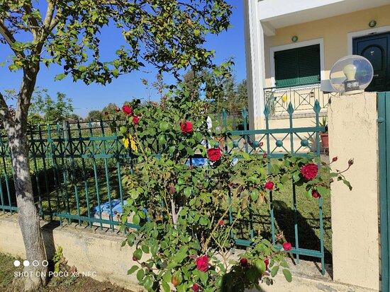 Palamas, Greece: Άνοιξη!