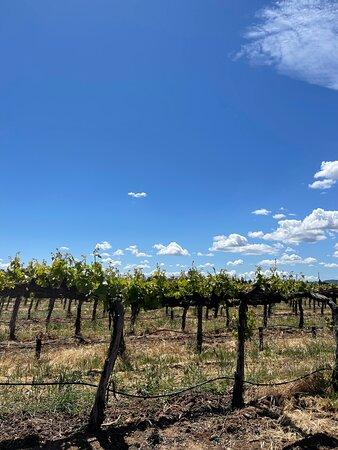 Small-Group Wine-Tasting Tour through Napa Valley Image